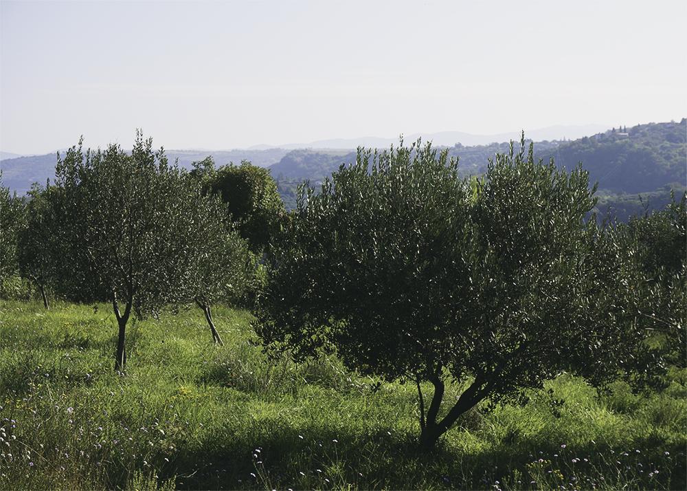 slovenien-olivolja-6